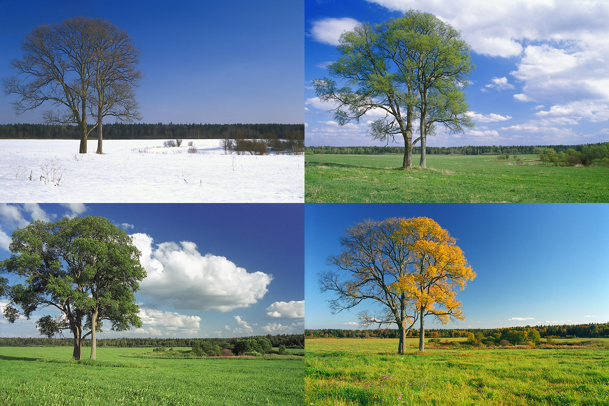 Картинки осень зима весна