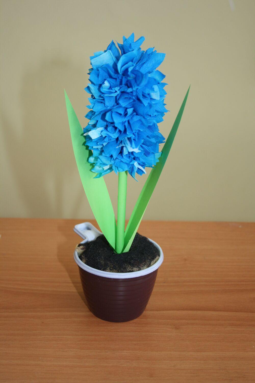 Гиацинты в домашних условиях - как выращивать, уход 81